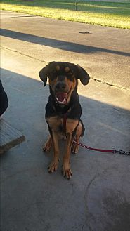 Black and Tan Coonhound/German Shepherd Dog Mix Dog for adoption in Spring, Texas - Blaze