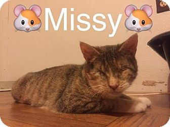 Domestic Shorthair Cat for adoption in Breinigsville, Pennsylvania - Missy