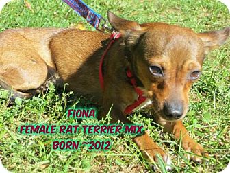 Rat Terrier Mix Dog for adoption in Huddleston, Virginia - Fiona