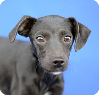 Terrier (Unknown Type, Small) Mix Dog for adoption in LAFAYETTE, Louisiana - FLEUR