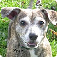Adopt A Pet :: Zeke - Warren, PA