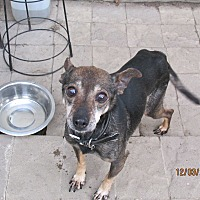 Adopt A Pet :: Susie - 13 - Wapwallopen, PA