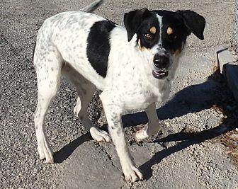 Pointer/Hound (Unknown Type) Mix Dog for adoption in Seguin, Texas - Laverne