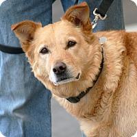 Adopt A Pet :: Brazilian - Palmdale, CA