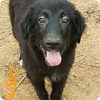 Adopt A Pet :: Dawson - Niagra Falls, NY