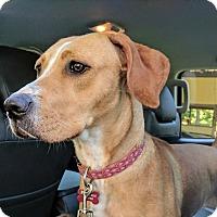 Adopt A Pet :: Mavis - Pittsboro, NC