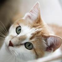 Adopt A Pet :: Bengie - Hastings, MN