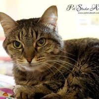 Adopt A Pet :: Sasha - Georgetown, TX