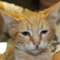 Adopt A Pet :: Magnum - Robinson, IL