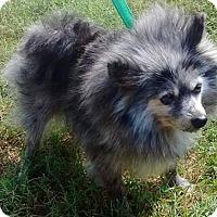 Adopt A Pet :: Aurora - Venice, FL