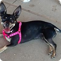 Adopt A Pet :: Leia - Fillmore, CA