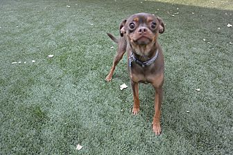 Mixed Breed (Small) Mix Dog for adoption in Meridian, Idaho - Vinny