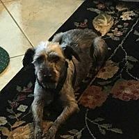 Adopt A Pet :: Mindy - Coopersburg, PA