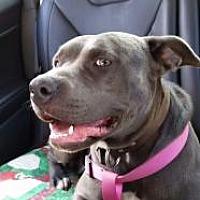 Adopt A Pet :: Breeze - Bakersville, NC