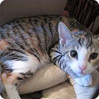 Adopt A Pet :: Holly - Acme, PA