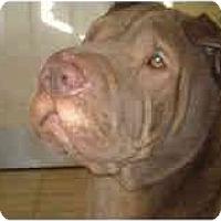 Adopt A Pet :: Brad - Bethesda, MD