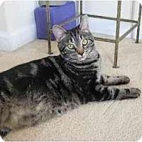 Adopt A Pet :: Ponch - Greenville, SC