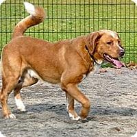 Adopt A Pet :: Spike - Hamilton, ON