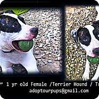 Adopt A Pet :: Pipi - Grafton, OH