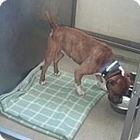 Adopt A Pet :: Harvey - Wappingers Falls, NY
