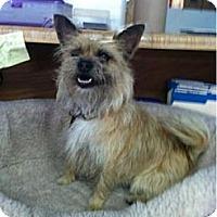 Adopt A Pet :: Tosca - Goleta, CA