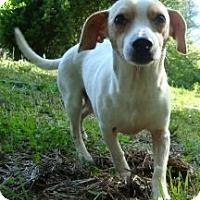 Adopt A Pet :: CheeWaaWaa (Reduced) - Ocala, FL