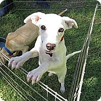 Adopt A Pet :: Felix - Scottsdale, AZ