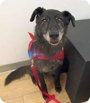 Labrador Retriever Mix Dog for adoption in Los Angeles, California - GABLE