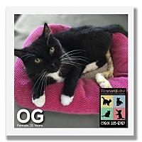 Adopt A Pet :: OG - Palm Desert, CA