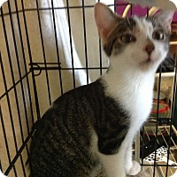 Adopt A Pet :: Roger - Colmar, PA