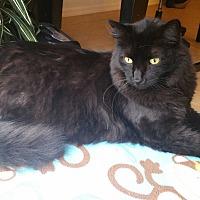 Adopt A Pet :: Kodiak - Estero, FL