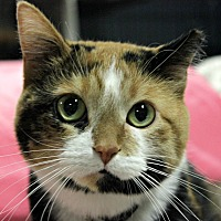 Adopt A Pet :: Belinda - New Richmond,, WI