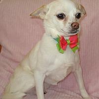 Adopt A Pet :: Heidi - Charlotte, NC