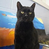 Adopt A Pet :: Oliver- Come see me at Petco! - New Milford, CT