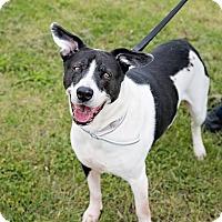 Adopt A Pet :: Daisy - Schererville, IN
