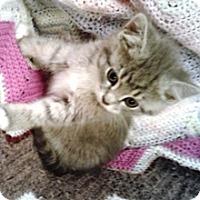 Adopt A Pet :: Toby - Lebanon, PA