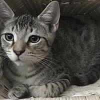 Adopt A Pet :: Castiel (LB/JS) 3.24.17 - Orlando, FL