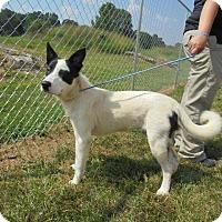 Adopt A Pet :: Big Boy - Springfield, TN