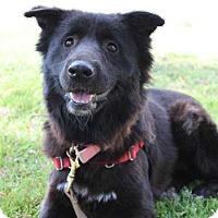Adopt A Pet :: Tegan - Mebane, NC