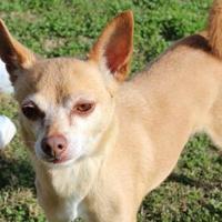 Adopt A Pet :: Waldo - Georgetown, TX
