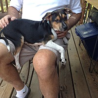 Adopt A Pet :: Nicholas - ST LOUIS, MO