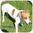 Photo 1 - Jack Russell Terrier Mix Dog for adoption in Slidell, Louisiana - Uncle Fester
