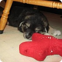Adopt A Pet :: Wilson - Surrey, BC