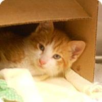 Adopt A Pet :: Taz - Maywood, NJ