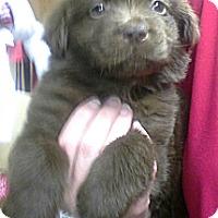 Adopt A Pet :: Grover - Silsbee, TX