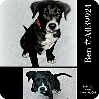 Labrador Retriever Mix Puppy for adoption in Lufkin, Texas - Ben
