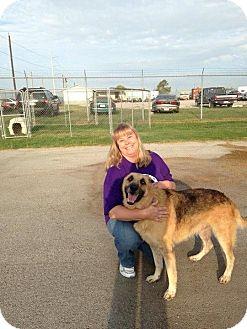 German Shepherd Dog Dog for adoption in Fort Worth, Texas - Hank
