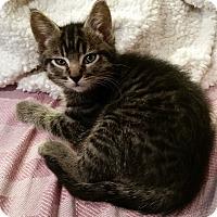 Adopt A Pet :: Keanu - Portland, OR