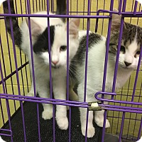 Adopt A Pet :: Patch - Richboro, PA