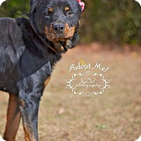 Adopt A Pet :: Precious - Fort Valley, GA